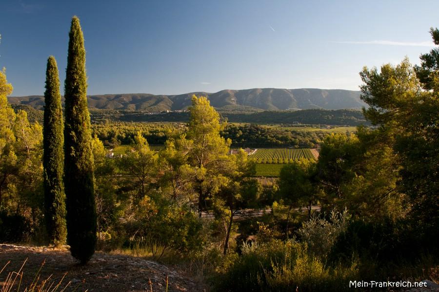 Säulenzypressen im Abendlicht und im Hintergrund die Hügel des Luberon
