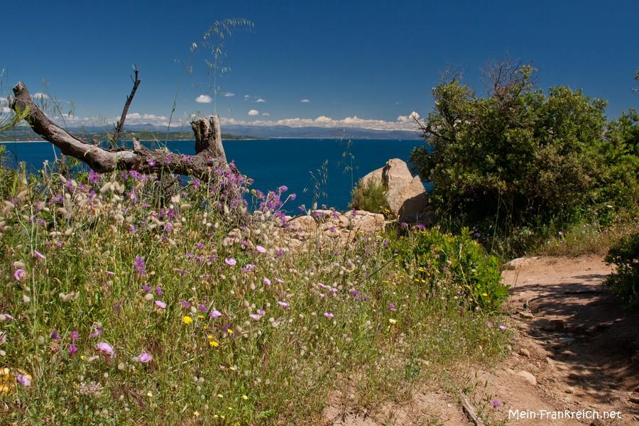 Cap Camarat an der Côte d'Azur